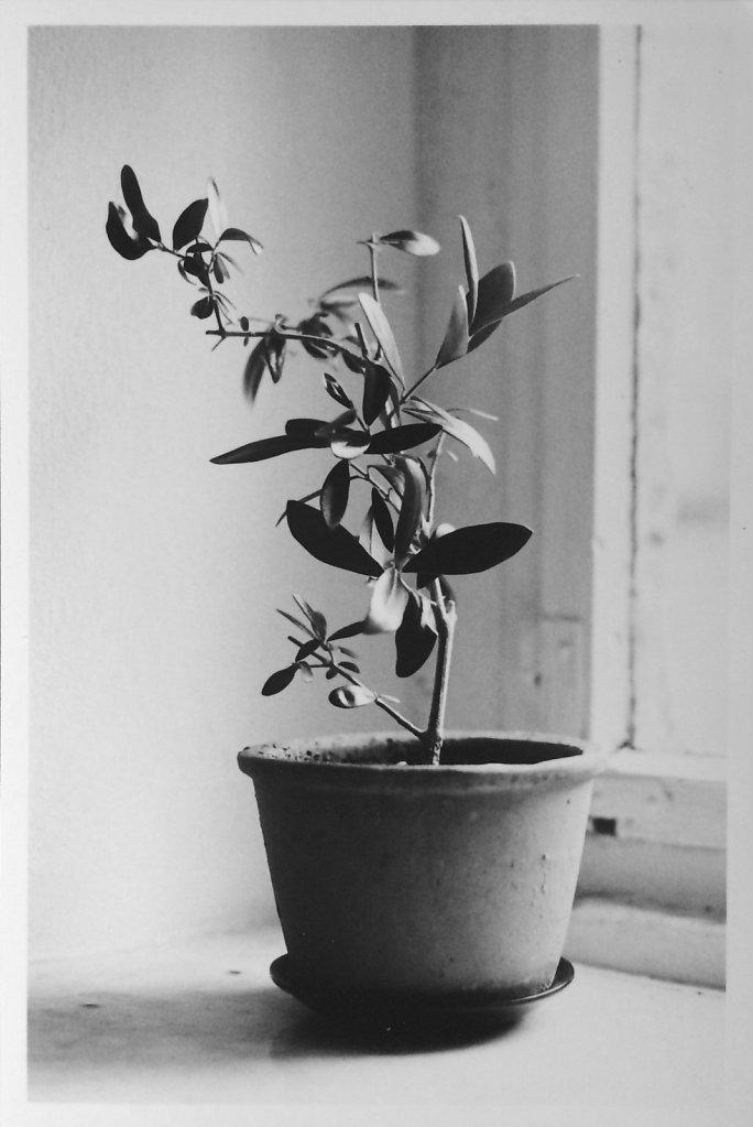 ca-pflanze.jpg